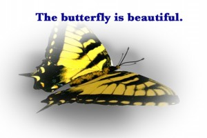 butterfly is beautiful